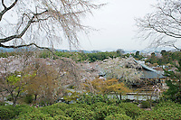 The rooftops of the Tenryu-ji Temple amidst the weeping cherry blossom which fills the 14th century gardens around the temple