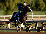 OCT 29: Breeders' Cup Turf entrant Bricks and Mortar, trained by Chad C. Brown, gallops at Santa Anita Park in Arcadia, California on Oct 29, 2019. Evers/Eclipse Sportswire/Breeders' Cup