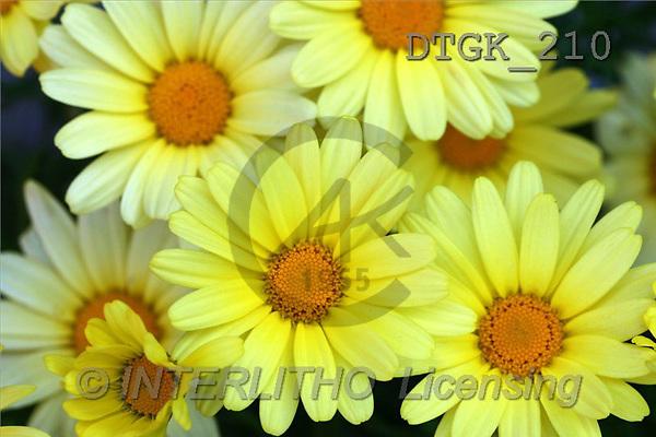 Gisela, FLOWERS, photos(DTGK210,#F#) Blumen, flores, retrato