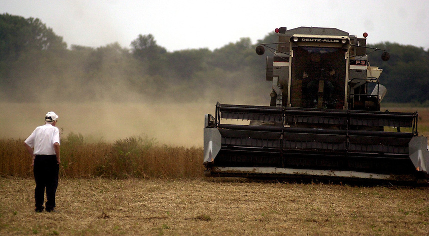 Oscar Kohlman watches as his son, Alan, combines a field of soy beans. Kohlman, who has owned the land for 57 years, says that there was not enough rain this year for a good crop. (Danny Gawlowski/The Lima News).