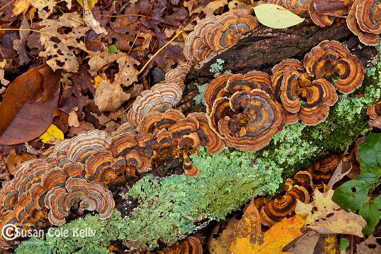 Fall mushrooms in the Middlesex Fells Reservation, Melrose, MA, USA