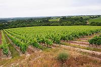 Vineyard. Domaine Chateau de la Roche aux Moines, Savennieres, Anjou, Loire, France
