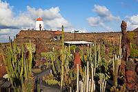 Spain, Canary Island, Lanzarote, Guatiza: Jardin de Cactus (Cactus Garden) with windmill | Spanien, Kanarische Inseln, Lanzarote, Guatiza: Jardin de Cactus (Kakteengarten) mit Windmuehle