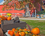 Autumn harvest in Hollis, NH, USA