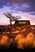 Entry sign of the Hualalai resort next to a Kaiwe tree, Big Island
