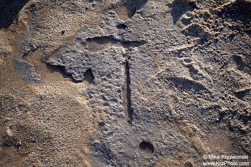 Hawaiian petroglyph  (normally under the sand) near the shoreline at Keiki Beach, North Shore, O'ahu.