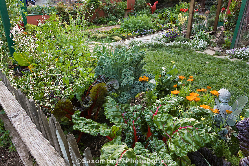Looking over rustic wooden picket fence into Rosalind Creasy front yard garden with ornamental edible vegetable borders