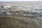 Flotsam driven inshore by waves in murky brown sea water Dovercourt, Harwich, Essex, England
