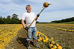 Austria Styria, cultivation of pumpkin, the seeds are used for processing of pumpkin seed oil / Oesterreich Steiermark, Anbau von Kuerbis und Verarbeitung zu Kuerbiskernoel, Ernte bei Landwirt Herbert Semler (im Portraet)