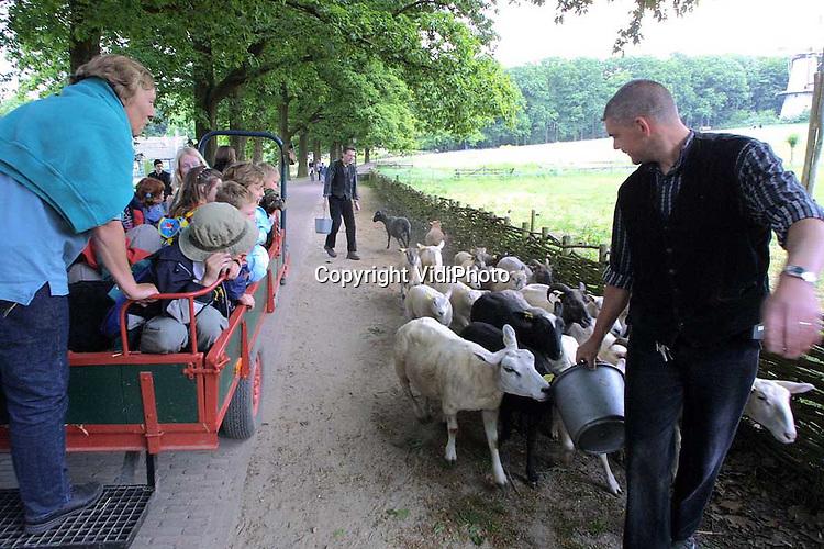 Foto: VidiPhoto..ARNHEM - Tijdens de MKZ-crisis waren ze veilig opgeborgen in boerderij Beerta. Vrijdag mochten de schapen van het Openluchtmuseum in Arnhem voor het eerst weer de wei in. Het verplaatsen van de schapen trok de nodige belangstelling van de bezoekers.