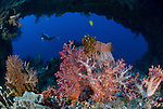 Soft corals and barrel sponge with a natural reef arch behind it. Diver in the background