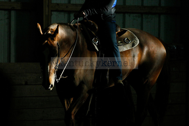 Molly Kerr rides during her lesson at the UK Equestrian team practice in Lexington, Ky., on Friday, February 22, 2013. UK lost 69-52. Photo by Tessa Lighty | Staff