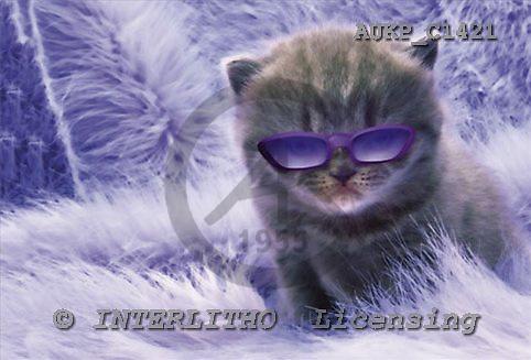 Samantha, ANIMALS,  photos,+cats,++++,AUKPC1421,#A# Humor, lustig, divertido