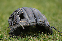 Baseball glove on April 24, 2016 at Fifth Third Ballpark in Comstock, Michigan. (Andrew Woolley/Four Seam Images)