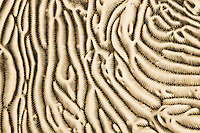 Coral Abstract Macro of hard coral surface, Palau Micronesia. (Photo by Matt Considine - Images of Asia Collection)