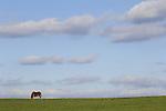 Horses- Scenic