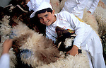 Samaria, a Samaritan boy with sheep before the Passover Sacrifice on mount Gerizim&#xA;<br />