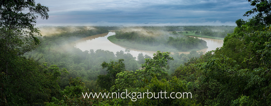 Early morning mist over riverine forest, at a giant ox-bow bend along the Kinabatangan River, Sabah, Borneo.