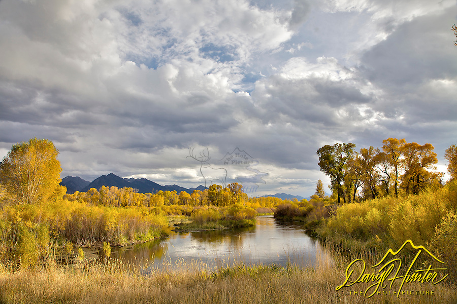 The golden cottonwoods and yellow willows of fall nicely frame DePuy Spring Creek of Paradise Valley Montana. DePuy Spring Creek is a world-class trout fishery nestled between the breathtaking vistas of the Absaroka and Gallatin mountain ranges in beautiful Paradise Valley south of Livingston, Montana.