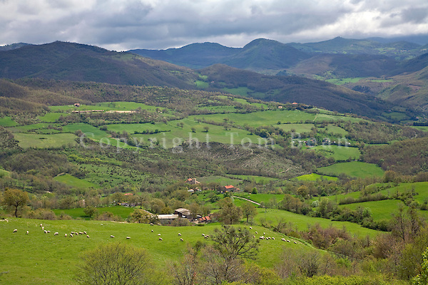 Sheep graze on green pasture west of Pieve Santo Sfefano, in the Central Apennines, Tuscany, Italy, AGPix_1902.