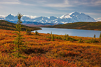 Autumn tundra along the shore of Wonder Lake, Mt Denali of the Alaska range mountains, Denali National Park, interior, Alaska.