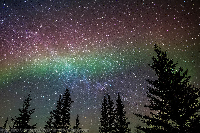 The northern lights and the milky way galaxy silhouetted spruce trees, Arctic, Alaska.