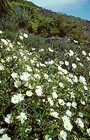 Mediterranean Maquis Habitat