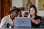 Cheetah (Acinonyx jubatus) biologist, Xia Stevens, reviewing photographs from lodge guide, Moses Mwale, to identify individual cheetahs, Kafue National Park, Zambia