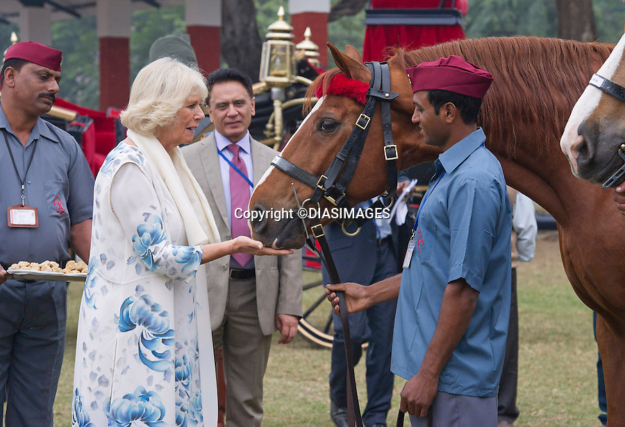 PRINCE CHARLES AND CAMILLA<br /> visit the Indian Military Academy in Dehradun, Uttrakhand_07/11/2013.<br /> During the visit Camilla observed various displays by the military horses.<br /> She also fed the horses with sugar cubes.<br /> Mandatory Credit Photo: &copy;Dias/DIASIMAGES<br /> <br /> **ALL FEES PAYABLE TO: &quot;NEWSPIX INTERNATIONAL&quot;**<br /> <br /> IMMEDIATE CONFIRMATION OF USAGE REQUIRED:<br /> Newspix International, 31 Chinnery Hill, Bishop's Stortford, ENGLAND CM23 3PS<br /> Tel:+441279 324672  ; Fax: +441279656877<br /> Mobile:  07775681153<br /> e-mail: info@newspixinternational.co.uk