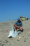 Skeleton coast au bord de l'Atlantique ;squelettes de cétacé. Afrique.Namibia; Africa