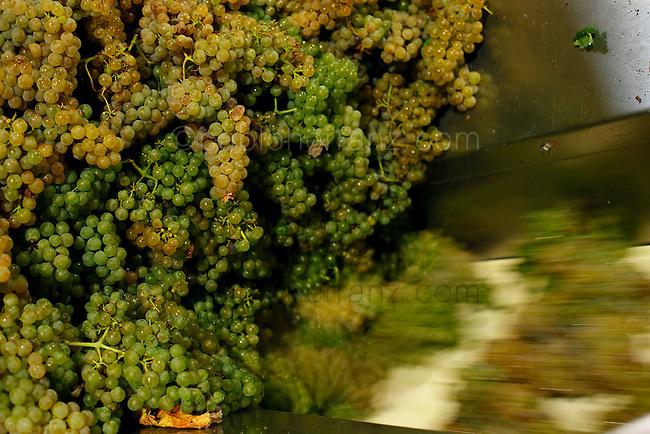 Bodega Terras Gauda, procesado de la uva.