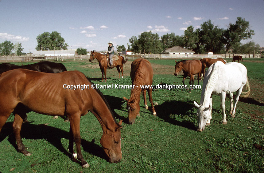 From the early 1950s until the late 1970s, the Hanging Diamond A brand belonged to one of the largest horse ranches in the United States: The Kramer Horse Ranch in Cohagen, Montana. Owned and operated by Bud and Bobby Kramer, the outfit ran as many as 10,000 horses on more than 150,000 acres.