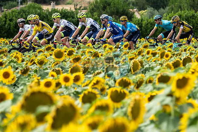 The peloton including Yellow Jersey Julian Alaphilippe (FRA) Deceuninck-Quick Step race by the sunflower fields during Stage 11 of the 2019 Tour de France running 167km from Albi to Toulouse, France. 17th July 2019.<br /> Picture: ASO/Pauline Ballet   Cyclefile<br /> All photos usage must carry mandatory copyright credit (© Cyclefile   ASO/Pauline Ballet)