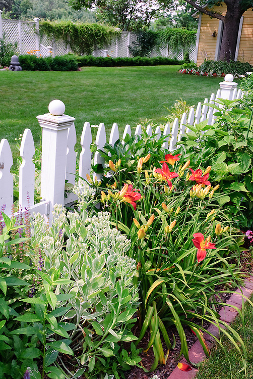 White picket fence with daylilies red Hemerocallis, Sedum, lawn grass, garden, trees, climbing vines, house, pretty backyard