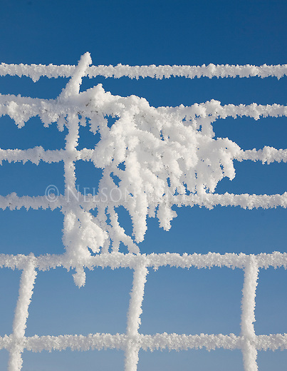 Heavy hoarfrost covering a fence and a branch on a blue sky day
