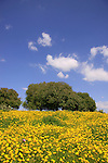 Israel, Lower Galilee, springtime in Hurvat Usha.