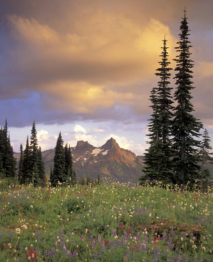 Sunset over alpine meadow and Tatoosh Range, Dead Horse Creek, Paradise, Mt Rainier National Park, Washington