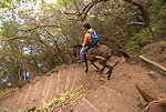 Hawaii: Molokai, the Mule Ride from the cliff tops down 1,600 feet to the leper colony at Kalaupapa. Model released..Photo himolo140-72186.Photo copyright Lee Foster, www.fostertravel.com, lee@fostertravel.com, 510-549-2202