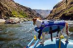 Dog on the river rafting trip on the Lower Salmon River, central Idaho
