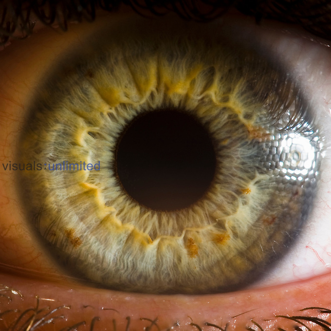 Close up of human eye