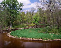 The Big South Branch of the National Scenic Pere Marquette River; Manistee National Forest, MI