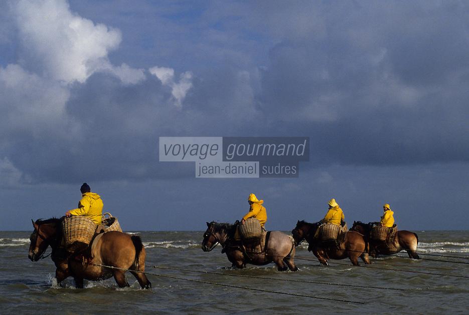 Europe/Belgique/Flandre/Flandre Occidentale/Oostduinkerke : Pêche à la crevette à cheval