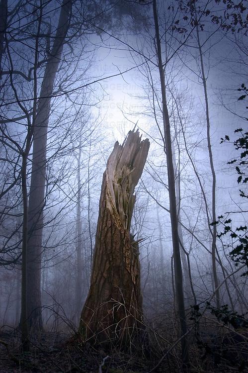A broken tree in a misty woodland