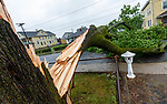 WATERBURY , CT-080420JS01—A large tree split and was blocking Congress Avenue in Waterbury as Tropical Storm Isaias tore through the region on Tuesday leaving a path of damage and many without power. <br /> Jim Shannon Republican-American