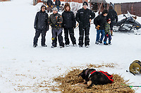 Local residents watch the teams rest at the Kaltag checkpoint on Saturday March 9th during the 2019 Iditarod Trail Sled Dog Race.<br /> <br /> Photo by Jeff Schultz/  (C) 2019  ALL RIGHTS RESERVED