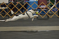 Santa Paws Flyball Tournament Dec 2015
