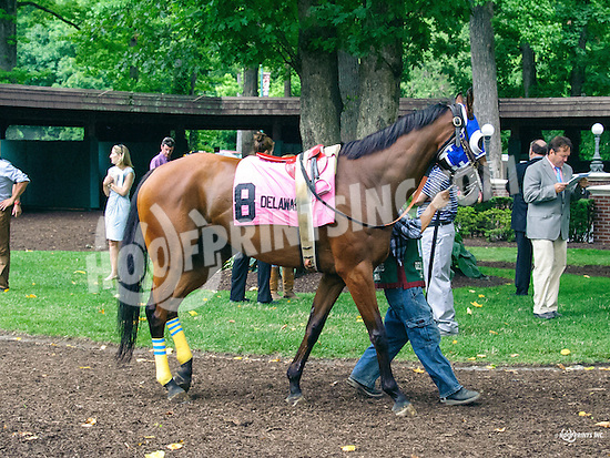 Willy d'Rocket before The Cape Henlopen Stakes at Delaware Park on 7/9/16