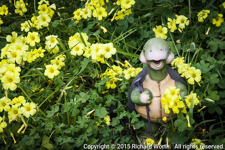 A fanciful turtle yard ornament surrounded by yellow oxalis blossoms and green leaves.