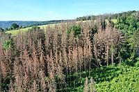 Fichten, Fichte sind vertrocknet und durch Borkenkäfer geschädigt, Fichtenwald, Fichtenwälder, Nadelwälder, Nadelwald, Fichtensterben, Waldsterben, Klimawandel, Erderwärmung, Hitze, Trockenschäden, Trockenheit, Deutschland, Weserbergland, forest dieback, forest decline, climate change, global warming, heat, dryness, spruce, Germany