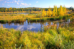 autumn ponds